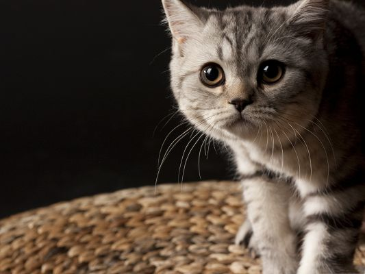 click to free download the wallpaper--Little Cute Cat, Small Striped Kitten, Wide Open Eyes, Deeply Impressive