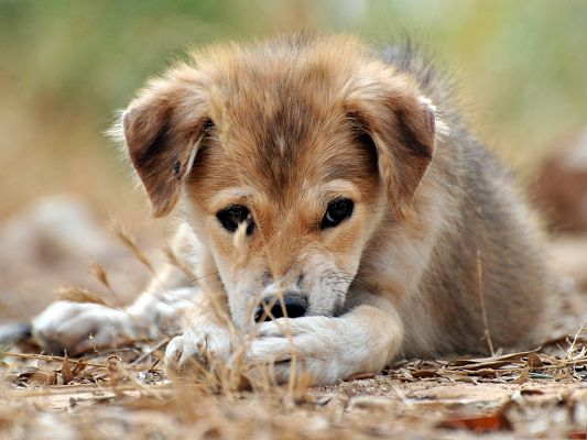 click to free download the wallpaper--Little Dog Photo, Sad Mongrel Puppy Outdoor, Endless Fun