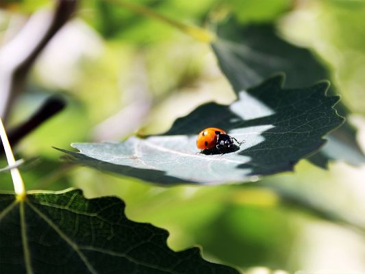 click to free download the wallpaper--Little Insect and Plant, Orange Ladybug in Sunlight, Great in Look
