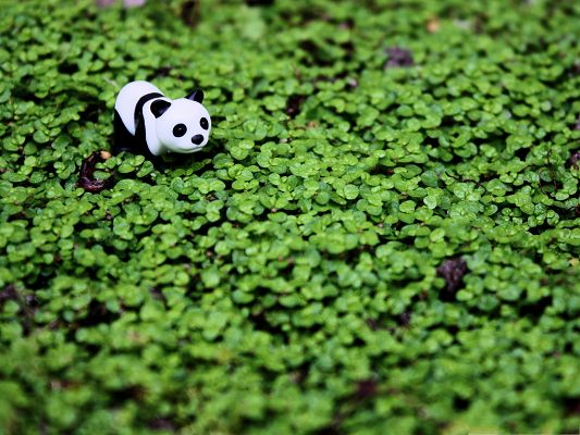 click to free download the wallpaper--Little Toy Panda Among Green Grass, Attentive Eyes - Free Animals Wallpaper