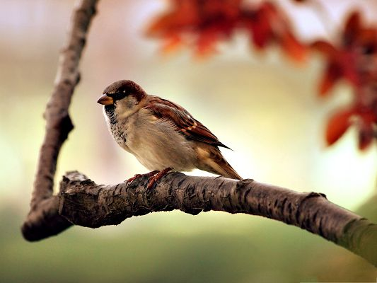 click to free download the wallpaper--Lonely Bird Photography, Bird on Branch, Focusing on the Extremely Red Leaves
