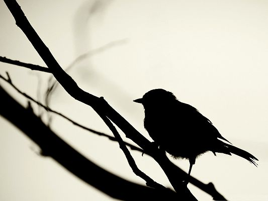 click to free download the wallpaper--Lonely Bird Silhouette, Small Bird Standing on Branch, Dusk Scene