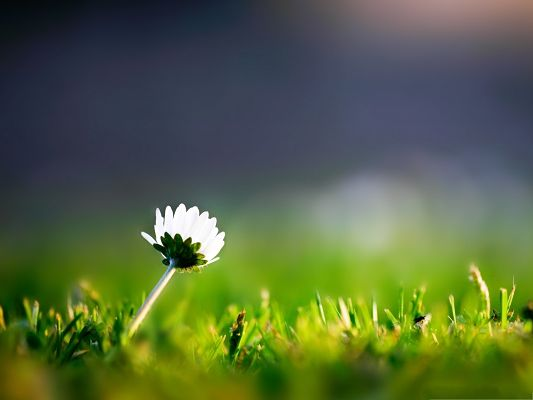 click to free download the wallpaper--Lonely Flower Image, a White and Pure Flower Among Green Scene