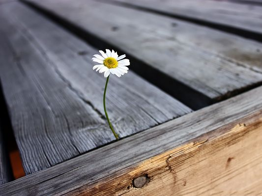 click to free download the wallpaper--Lonely Flower Picture, Tiny White Flower in Bloom, Tough Living Condition
