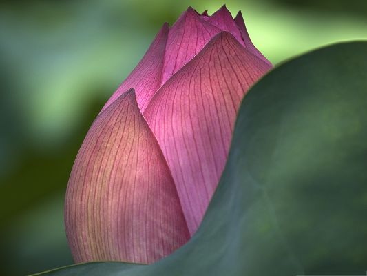click to free download the wallpaper--Lotus Flowers Picture, Blooming Small Flower, Something Miracle Inside