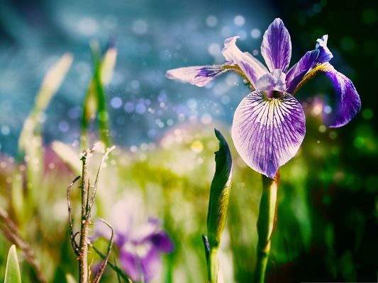 click to free download the wallpaper--Magic Flowers Picture, Purple Blooming Flowers, Green Stem