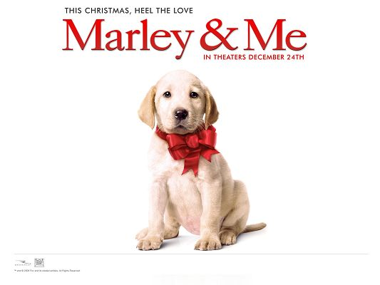 click to free download the wallpaper--Marley & Me Dog Post in 1600x1200 Pixel, Little Puppy Beautifully Dressed, He Shall Look Good on Various Devices - TV & Movies Post