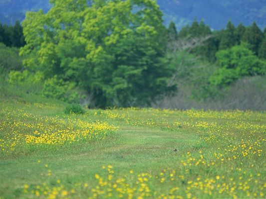 click to free download the wallpaper--Meadow Flowers Image, Yellow and Green Flowers Beside the Green Tall Tree