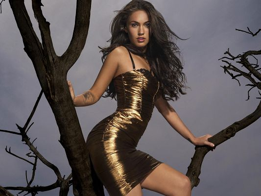 Megan Fox Latest HD Post in Pixel of 1920x1200, Girl in Golden Tight Dress, How Can She Sit on the Brach of a Tree? - TV & Movies Post