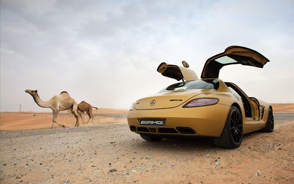 Mercedes Benz SLS AMG Desert Gold Post in Pixel of 1920x1200, Car in Stop While Camels in the Run, Wild Beauty and Natural Scene - HD Cars Wallpaper