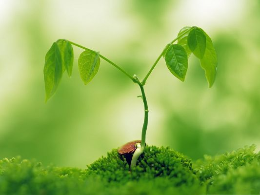 click to free download the wallpaper--Miracle of Life, Sprout Plant Breaking Thick Earth, Hard to Believe