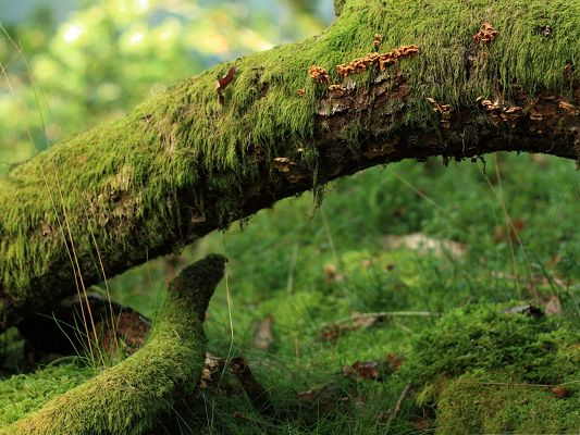 Moss Plant Pictures, Moss on Tree, Brown Leaves, Amazing Scene