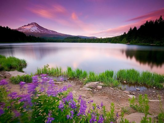 click to free download the wallpaper--Mountain Flowers Photography, Purple Flowers Along the Mirror-Like Lake