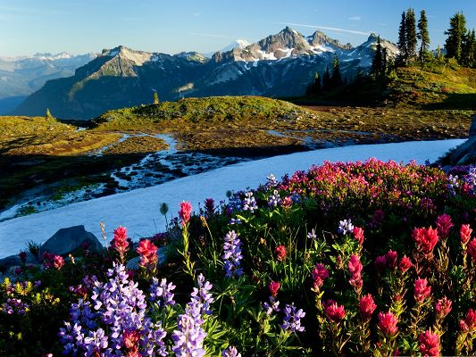 click to free download the wallpaper--Mountain Flowers Picture, Colorful Blooming Flower on Hillside, Under the Blue Sky