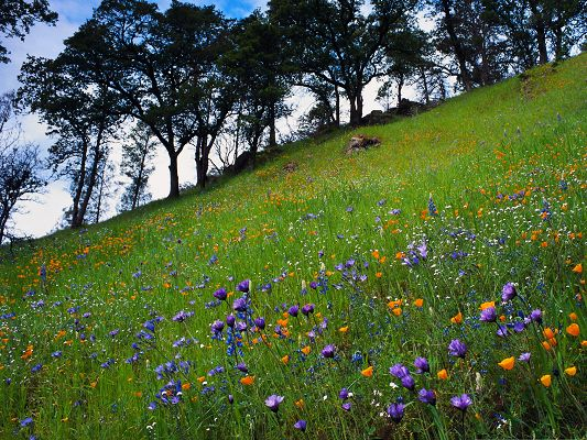 Mountain Flowers Picture, Colorful Flowers in Bloom, Great Flower Field