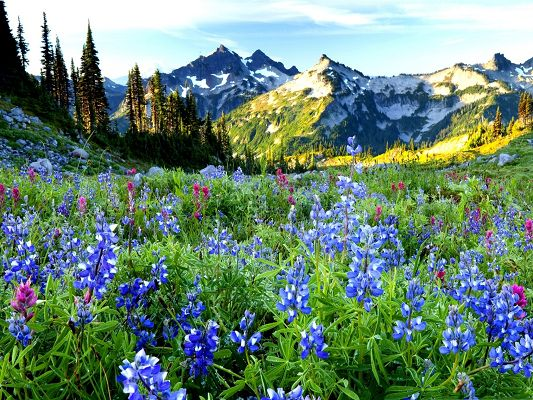 click to free download the wallpaper--Mountain Flowers Picture, Little Beautiful Flowers at the Feet of the Hill, Flower Field