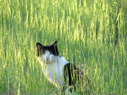 click to free download the wallpaper--Mysterious Cat Image, Black and White Kitten Staying Among Green Grass