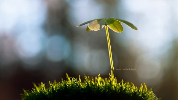 click to free download the wallpaper--Natural Images Wallpaper - A Little Yet Tough Plant on Green Grass, Mere Background, an Amazing Scene