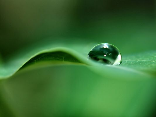 click to free download the wallpaper--Natural Landscape Images, a Round Waterdrop on Green Leaf, Never Leave Each Other