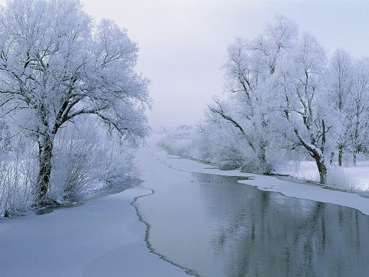 Natural Landscape Photo, River in Winter, White Trees Alongside