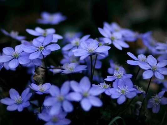 click to free download the wallpaper--Natural Landscape Photography, Small Blue Flowers, Be Optimistic and Smile