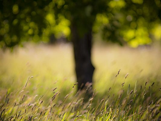 click to free download the wallpaper--Natural Landscape Wallpaper, Summer Grass Under the Tall and Green Tree, a Blowing Wind