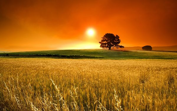 Natural Scene Pics - The Rising Sun, Green Grass and Yellow Wheats, Fruitful and Fine Autumn