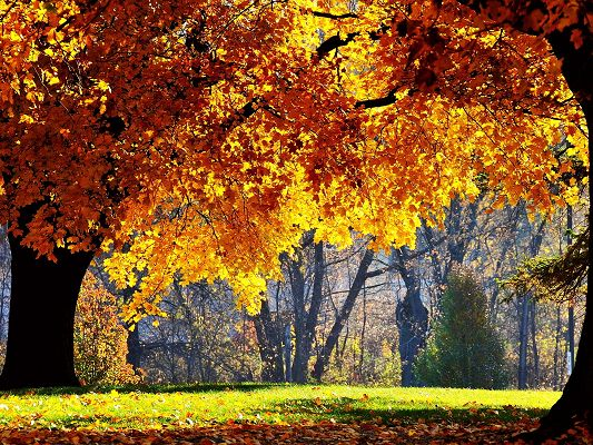 Natural Scene Wallpapers, Yellow Leaves Under the Sun's Glow, Green Grass, Beautiful Image