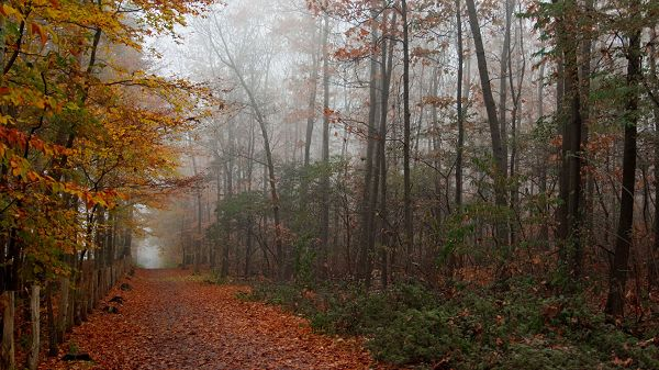 click to free download the wallpaper--Natural Scenery photos - Leaves Are Falling Due to the Rain, Misty and Great Scene