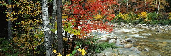 click to free download the wallpaper--Natural Scenery photos - Leaves in Various Colors, River is Clear and in Rapid Flow, an Amazing Scene