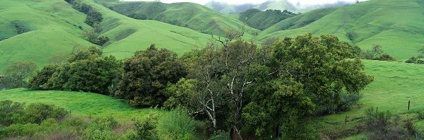 Natural Scenery pictures – Tall and Green Trees on Numerous Hills, is Highly Protective of the Eyes