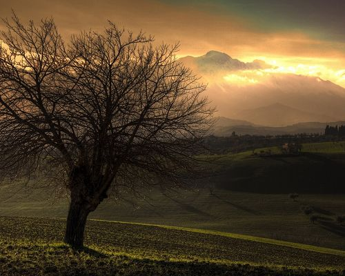 Natural Scenes Image, Autumn Sunset, Green Mountains, Bald Trees