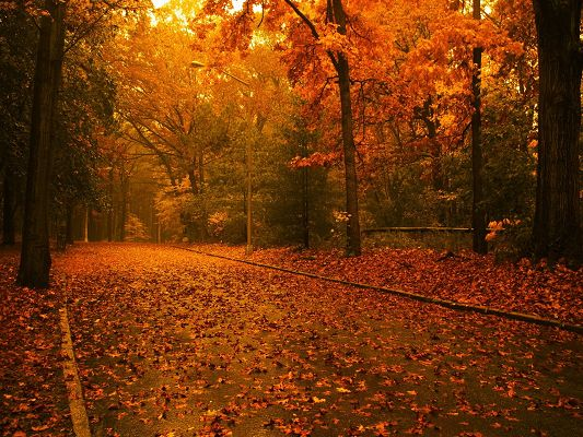 Natural Scenes Images, Raining, Red and Fallen Leaves, Beautiful Scenery