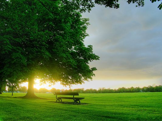 click to free download the wallpaper--Natural Summer Landscape, Tall Prosperous Trees and Green Grass, Incredible Scenery