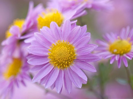 click to free download the wallpaper--Nature Flowers Image, Purple Flowers Under Macro Focus, Impressive Look