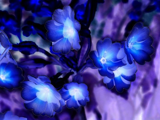click to free download the wallpaper--Nature Flowers Picture, Blue Glowing Flowers, Impressive Scene