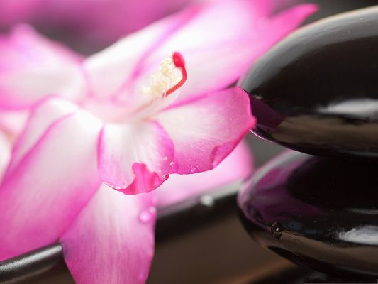 click to free download the wallpaper--Nature Flowers Picture, Pink Flower Around Black Stone, Combine Amazing Scene
