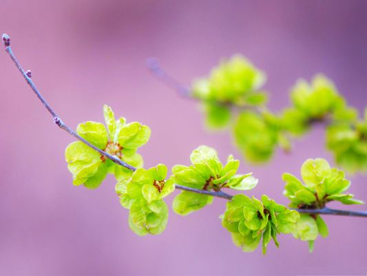 click to free download the wallpaper--Nature Flowers Picture, Small Green Flowers Under Micro Focus, Light Purple Background