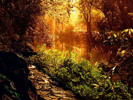 click to free download the wallpaper--Nature Forest Landscape, Golden Sunlight on Natural Plants, Amazing Scenery