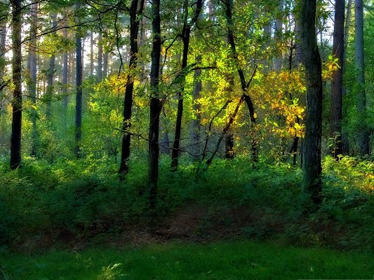 click to free download the wallpaper--Nature Forest Landscape, Green Prosperous Plants, Sunlight Breaking in
