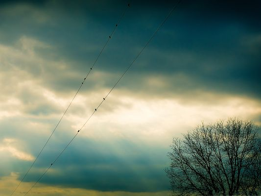 click to free download the wallpaper--Nature Landscape Image, Flock of Birds on Thin Wire, Tall Prosperous Tree
