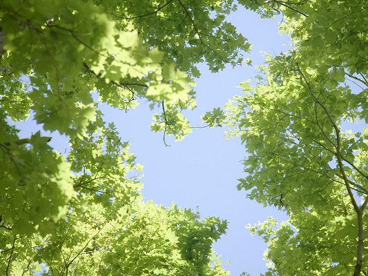 click to free download the wallpaper--Nature Landscape Image, Green Leaves, the Blue Sky, Sunshine Pouring on Them