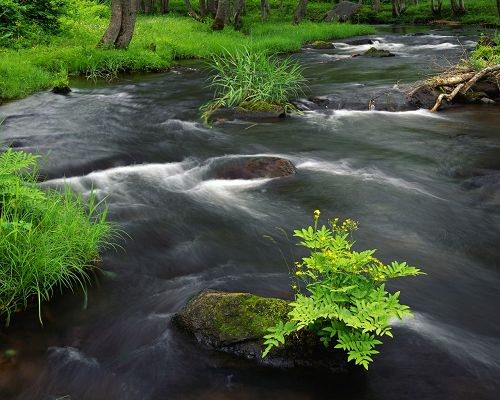 click to free download the wallpaper--Nature Landscape Image, Rapid River Across Green Plants, Prosperous Scene