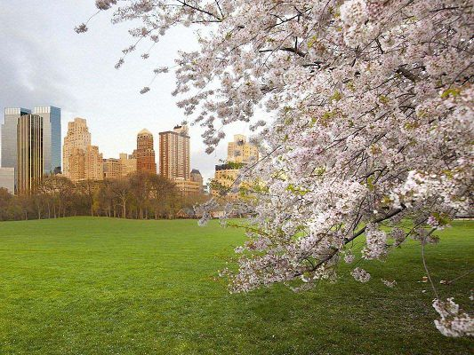 click to free download the wallpaper--Nature Landscape Image, Spring in the City, Little Flowers in Bloom, Tall Buildings