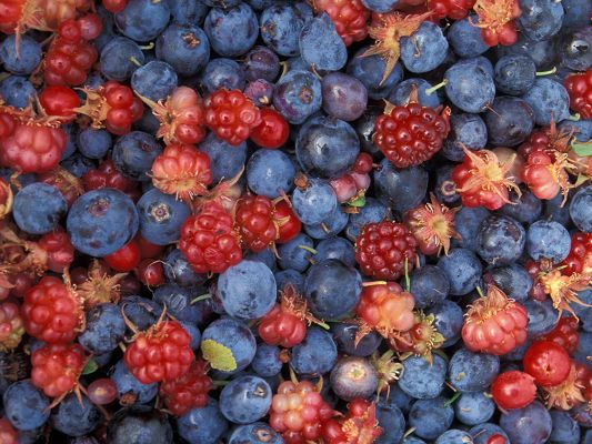 click to free download the wallpaper--Nature Landscape Image, Summer Berries, Delicious and Appealing