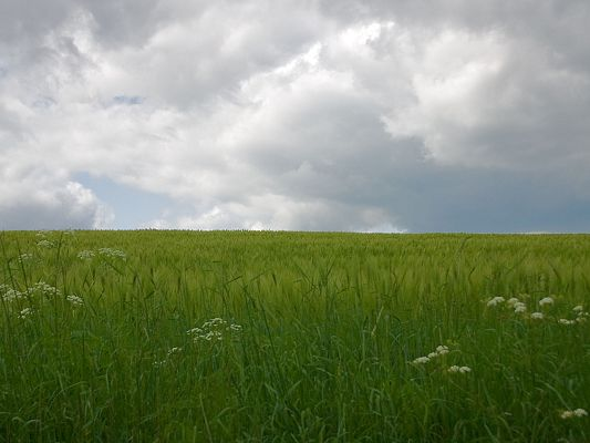 Nature Landscape Images, Rain Field Under the Cloudy Sky, is Impressive Scenery
