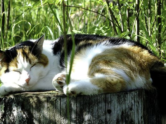 Nature Landscape Images, Sleeping Kitty, Green and Tall Bamboos, Peaceful Scene