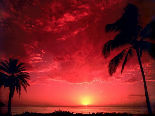 click to free download the wallpaper--Nature Landscape Images, the Setting Sun, the Red to Pink Sky, Palm Trees