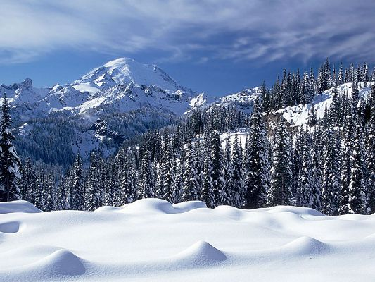 click to free download the wallpaper--Nature Landscape Photo, Snow Valley, Tall Trees Under the Blue Sky, Combine Incredible Scene