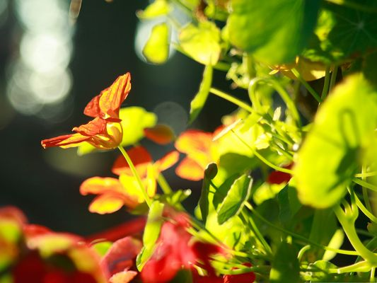 Nature Landscape Photography, Flowers In Sunlight, Bright and Comfortable Look